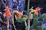012-la-terrazza-delle-piante-grasse-media