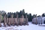 046-le-troiane-teatro-greco-di-siracusa-lo-scenario-con-gli-alberi-che-vengono-dalla-carnia-media
